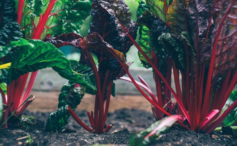 groentes uit tuin